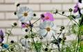 Znaczenie roślin wdomu iogrodzie - dlaczego warto je mieć?